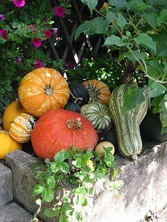 Gartenarbeiten im Herbst