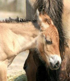 Horses, Explore, Animals, Animales, Animaux, Horse, Exploring, Animal Memes, Animal