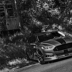 A quick #blackandwhitechallenge for my man @jivefuzzy. <<<<<<<<<<<<<<<<<< #LUCIFER /#2gfusions /#SterlingGrey / #King_of_Ford / #Steeda /#SteedaFusion / #steedaautosports /#TheLightingFirm /#FordCulture /#Fordfusion /#jaxwax / #eatsleepfords #ShelbyFusion / #WhoreyourFord /#Fusion /#Ford /#aCarsWorld /#NicheRoadWheels / #NicheTarga <<<<<<<<<<<<<<<<<< by bowslayer_01