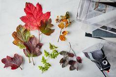 Bunte Herbstblätter für längere Zeit mit Glycerin oder Wachs haltbar machen