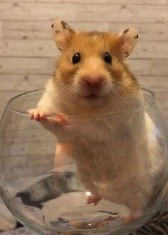 This sub is dedicated to hamsters and their humans. Hamsters, Heaven, Meet, Animals, Sky, Animaux, Heavens, Animal, Animales