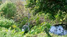 Άρωμα Ικαρίας: Κτηματολόγιο ''η αρπάγη της εύφορης κοιλάδας'' Plants, Plant, Planets