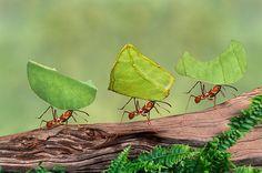 Week in Wildlife: leaf cutter ants