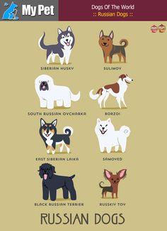 :: Russian Dogs :: From RUSSIA: Siberian Husky, Sulimov, South Russian Ovcharka, Borzoi, East Siberian laika, Samoyed, Black Russian Terrier, Russkiy Toy. #MrbigninkPage #KunLhingJingleBell