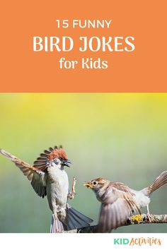 A collection of funny bird jokes for kids. Great, clean humor for the classroom, at home, or anywhere in-between. #KidActivities #KidGames #ActivitiesForKids #FunForKids #IdeasForKids #KidsJokes Kid Jokes, Funny Jokes For Kids, Silly Jokes, Kid Friendly Jokes, Funny Knock Knock Jokes, Why Do Birds, Brain Teasers For Kids, Funny Riddles, Cheesy Jokes