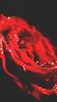Wallpaper iphone rose red nature New Ideas Iphone Wallpaper Preppy, Cloud Wallpaper, Red Wallpaper, Best Iphone Wallpapers, Cute Wallpapers, Wallpaper Backgrounds, Nature Wallpaper, Jiddu Krishnamurti, Walpapers Cute