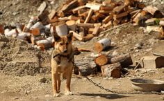 The Best and Worst States for Animals    Canada's animals cruelty laws need to change as well....Protect animals from cruelty.