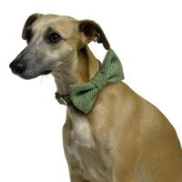 Bow Wow Ties from Love Your Dog - so freaking adorable. #butwillLouiewearit?