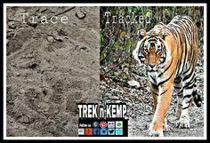 Tiger Reserve Safari  Packages : 1N2D Ranthambore National Park @ INR 2499/- pp Corbett National Park @ INR 1890/- pp