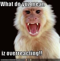 Ear Infections didn't read full article, but pinning just in case. Monkey Pictures, Funny Pictures, Different Types Of Monkeys, Monkey Bite, Monkey Monkey, Flying Monkey, Moves Like Jagger, Ear Infection, Animation