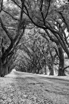 The Deep South Monochrome Photograph by Steve Harrington - The ...