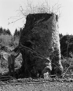 "Robert Adams, Kerstin, next to an old-growth stump, Coos County, Oregon, 1999 - 2003. From the series ""Turning Back"""