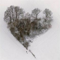 A heart-shaped group of trees in the snow in Datteln, Ruhr area, North Rhine-Westphalia, Germany