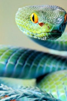 green beautiful snake staring look