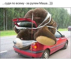 big teddy bear squashed in car - Funny Dirty Adult Jokes, Memes . Big Teddy, Giant Teddy, Enough Is Enough, Just For Laughs, Funny Posts, Laugh Out Loud, The Funny, Crazy Funny, Daily Funny