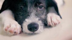 Quatro Patinhas NGO presents: Priceless Pets  ブラジルには、何千もの動物シェルターがあります。その多くは、捨てられたり保護されたりして、行き場を失った動物たちで溢れています。それでも人々は、シェルターの動物たちを選ばず、ペットショップでお金を払ってペットを購入しています。  しかし、血統書のある動物と、シェルターの動物たちに違いはありません。それを証明するために、動物保護団体「プライスレス・ペット」は、1日ペットショップを借りて、シェルターの動物たちを並べてみました。お客さんには、告げずに――。  そこには、ペットを飼いたい人と愛らしい動物たちとの出会いがありました。命、それは買うことよりも、守ることのほうが素晴らしいものです。