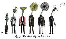 Evolution of the Mandelion