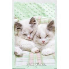 Twin kittens double the fluffy sweetness of the Trends International Kimberlin 2 Kittens Poster . Perfect for any kitty cat fan, this heavyweight. Pretty Cats, Beautiful Cats, Crazy Cat Lady, Crazy Cats, Kittens Cutest, Cats And Kittens, Cats Bus, Ragdoll Kittens, Baby Kittens