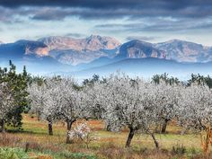 New ways of turism in Mallorca 10 lugares imprescindibles para 2014 - Including Hunan and Ha´apai Places Around The World, Around The Worlds, Belle Image Nature, Beautiful World, Beautiful Places, Nature Verte, Hotel Concierge, Almond Blossom, Balearic Islands