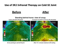 RevitaVet - infrared lights  Got the chance to use these on my horse last winter down south. I need to win some money and buy this for my horses. Amazing stuff