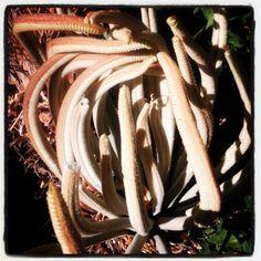 Weird plant. :-)