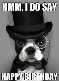 100 Ultimate Funny Happy Birthday Meme's – My Happy Birthday Wishes - Top-Trends 50th Birthday Meme, Happy Birthday Dog Meme, Happy Birthday Brother, Cat Birthday, Birthday Quotes, Humor Birthday, Birthday Ideas, Birthday Recipes, Birthday Pictures