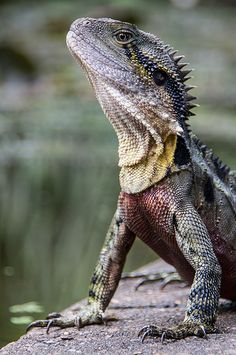 Would love to work with one of these some day. Water dragons are so cool!