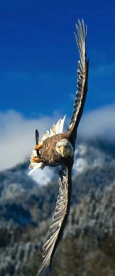 Awesome flying eagle over the mountain. Prophetic image of power. Please also visit www.JustForYouPropheticArt.com for colorful inspirational prophetic art and stories. Thank you so much! Blessings!