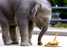 Happy Birthday Baby Elephant!