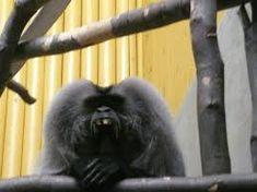 Výsledek obrázku pro nejroztomilejší zvířátka Monkey, Humor, Animals, Animales, Playsuit, Humour, Animaux, Monkeys, Animais