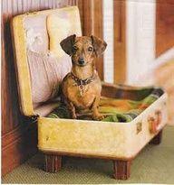~Super leuk idee om een oud koffer om te toveren tot hondenmand-bed: wil ik ook~