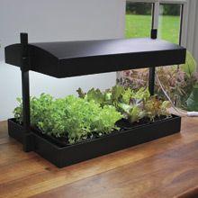 $124 Growlight Garden  http://www.veseys.com/ca/en/store/lightgardens/growlightgarden#closed