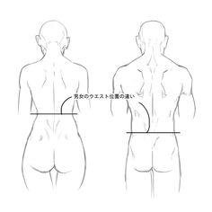 女性のウエストが肋骨のカーブのすぐ下に位置しているのに対し、男性のウエストはそれより下、へそと同位置かやや下に位置します。