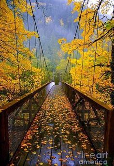 A warm photograph full of fall colors drawing you in. Autumn Bridge Crossing is a photograph taken on a fall day in Newhalem, WA. Photo is printed on glossy photograph paper and sized at Ready for framing and adding to your wall. Fall Pictures, Pretty Pictures, Autumn Photos, Fall Images, Amazing Pictures, Travel Pictures, Beautiful World, Beautiful Places, Autumn Scenery