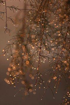 Diamonds in the trees