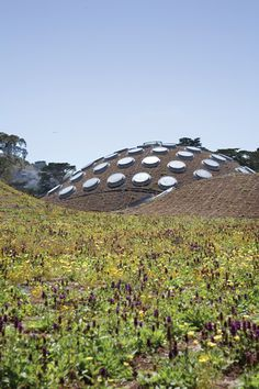 California's Academy of Science by Renzo Piano, Roof Garden