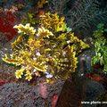 Indonésie Archipel d'Alor - photo-sous-marine