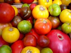 Tomatoes ~ Everything about canning or freezing plus some great recipes for tomatoes, by Start Cooking