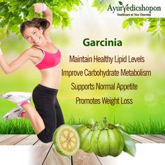Garcinia or Vrikshamla is a rich source of Hydroxy Citric acid (HCA), which works towards the management of healthy lipid level management. Garcinia helps in preventing the unhealthy accumulation of fat in the body & thus helps in weight loss. Buy Garcinia powder at #ayurvedicshopon.com #weightloss #garcinia #weightmanagement #slimming
