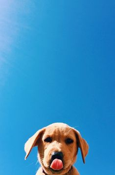 Animal Wallpaper - Hello my page Cute Puppies, Cute Dogs, Dogs And Puppies, Cute Babies, Doggies, Tier Wallpaper, Animal Wallpaper, Wallpaper Art, Wallpaper Backgrounds