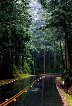 Rainy Road, California