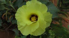 Linda flor do algodão