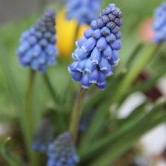Die 24 Besten Bilder Von Eckbeet In 2019 Flower Beds Flowers