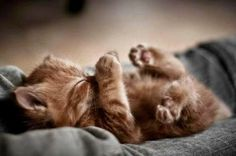 There's something about a curly paw picture that I just can't resist!
