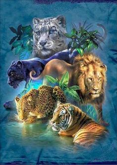 % DIY 5D Diamond Mosaic Lion tiger Handmade Diamond Painting Cross Stitch Kits Diamond Embroidery Patterns Rhinestones Arts. Yesterday's price: US $6.19 (5.20 EUR). Today's price: US $3.28 (2.79 EUR). Discount: 47%.