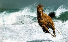 My two favorite things, horses and the beach