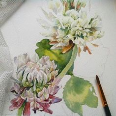 By @_petrova_ju_ to #cartel_watercolorists  ⚪ ⚪ ⚪   клевер.версия 2.процесс ✨ #aquarelle #watercolor #drawing #watercolorpainting #illustration #waterblog #watercolorart #flowers #акварель #клевер