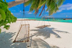 http://travelcentremaldives.com/maldives-blog/aaaveee-natures-paradise-authentic-maldivian-retreat  AaaVeee Nature's Paradise – an authentic Maldivian retreat