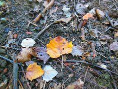 foliage in autunno con bambini dove andare in lombardia