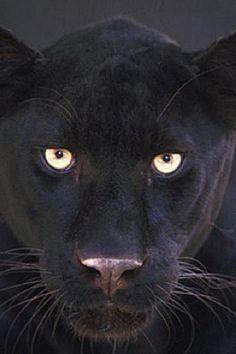 animais selvagens - Pesquisa Google